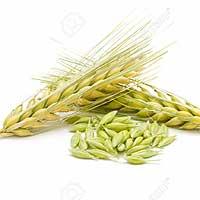 Barley improves blood sugar levels & reduce appetite