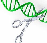 Gene editing may prevent genetic and inherited diseases
