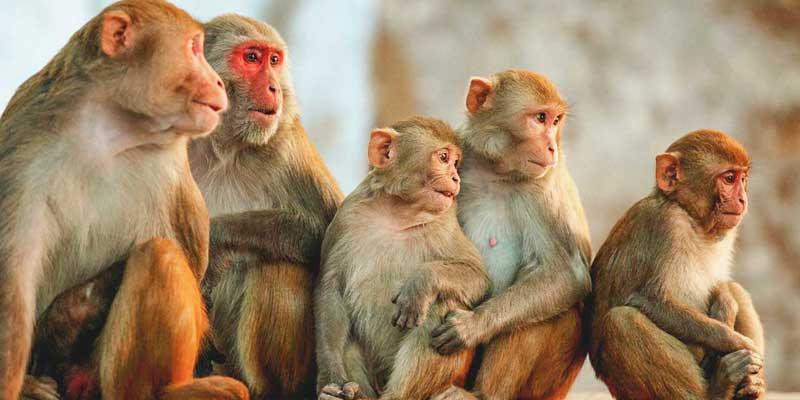 ChAdOx1 nCoV-19 vaccine protects monkeys against COVID-19 pneumonia